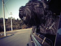 Rharus - the Giant Schnauzer