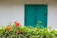 This July we are celebrating Milot, home of Hôpital Sacré Coeur! In this vibrant pinboard, you'll see images of the many different types of flowers and plants you see in Milot, Haiti.
