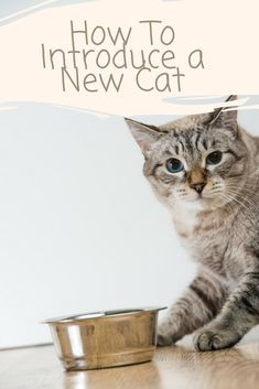 Are you thinking about bringing another cat home to be a friend to your cat, dog or other pet? Continue reading to learn how to introduce them. #cat #bestmeow #cats #kitten #catlover #catoftheday #kitty #meow #lovecats #kittens #cateducation #funnycats