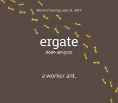 Courtesy of www.dictionary.com 07.31.17
