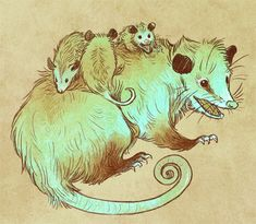 possum - Susan Meyer