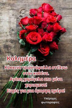 Good Morning, Christmas Wreaths, Holiday Decor, Buen Dia, Bonjour, Good Morning Wishes