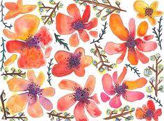 violabluff / ovocný sorbet |