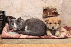 Vietato accudire cani e gatti randagi nel giardino del condominio
