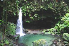 Emerald Pool, Dominica. Been here and LOVED it!!!