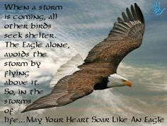 When a storm is coming, other birds take shelter. The Eagle alone, avoid the storm by flying above it. So in the storm of life.May Your Heart Soar Like An Eagle. The Eagles, Wings Like Eagles, Bald Eagles, Photo Aigle, Aigle Animal, Eagle Pictures, Isaiah 40 31, Eagle Wings, Christian Posters