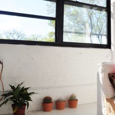 WINDOW/PLANTS
