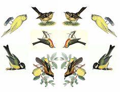 birds colage