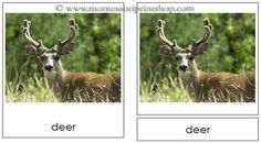 Woodland Animals - Montessori 3-Part Classified Cards - Printable Montessori Learning Materials for home and school.