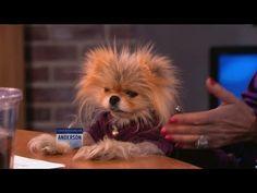 Lisa Vanderpump's Adorable Dog, Giggy!!