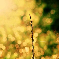Inspirational Examples of the Bokeh Effect