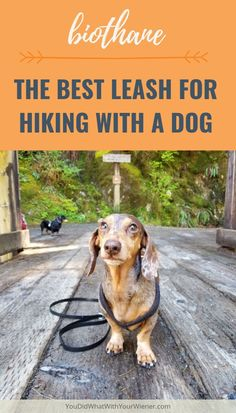 I spent years trying to find the best leash for hiking with my dogs and I found it. Cute Dog Toys, Fun Dog, Hiking Dogs, Hiking Gear, Animal Antics, Dog Facts, Dog Activities, Happy Puppy, Dog Travel