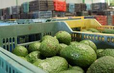 México y Vietnam firmaron acuerdos de comercio agroalimentario