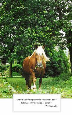 churchil, hors beauti, anim, horses, beauti creatur