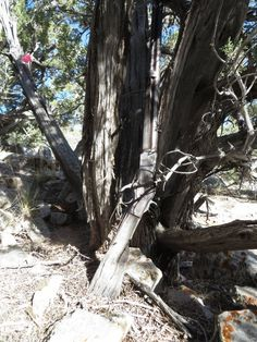 The mystery of the 132-year-old Winchester rifle found propped against a national park tree - The Washington Post