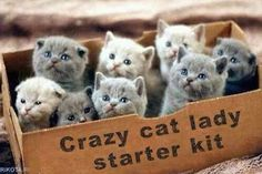 Crate of adorable kittens