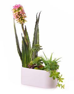 Kompozycja sukulenty kaktusy w donicy extra jakość