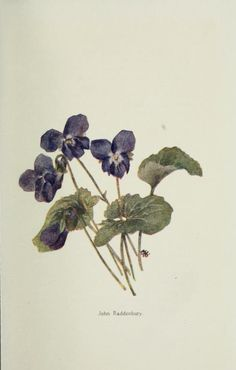 The violet book.  1922  - Biodiversity Heritage Library