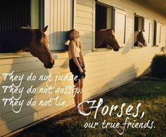 Horses our true friends