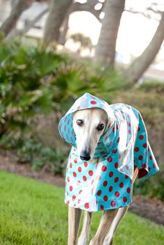 Dog Raincoat Slicker - Red Polka Dots on Turquoise @TreeParlor..............is this cute or WHAT?