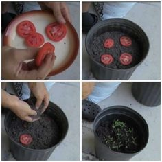 Edible Garden 72185 16 fruits and vegetables to grow INFINITELY from their leftovers - Tips and Tricks - Tips and Crafts Veg Garden, Fruit Garden, Edible Garden, Easy Garden, Indoor Garden, Garden Plants, Veggie Gardens, Vegetable Gardening, Potted Plants
