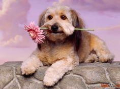 Schöne Bilder von Tieren