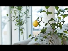 How To Regrow Fruit From Your Kitchen - YouTube