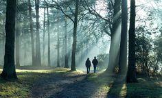 Woodland walk, Surrey, Richard Donkin