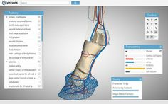 TOTALLY FREE- Hoof Explorer program a great tool for equine practitioners and veterinary students alike! With more than 150 anatomical structures the Hoof Explorer gives you a more complete understanding of the horse hoof.