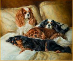 Cavaliers in each color. I love them all! One day I'd like to have a whole family of them just like this!