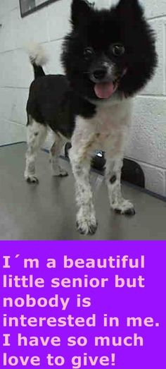 RASCAL (A1403413) I am a neutered male white and black Terrier mix. The shelter staff think I am about 9 years old and I weigh 17 pounds. I was found as a stray and I may be available for adoption on 06/14/2015. — hier: Miami Dade County Animal Services. https://www.facebook.com/urgentdogsofmiami/photos/pb.191859757515102.-2207520000.1434305498./989290847771985/?type=3&theater