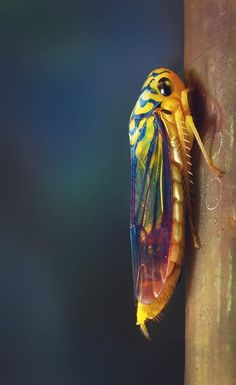 Colourful Cicada by Marcel Rodrigues on 500px
