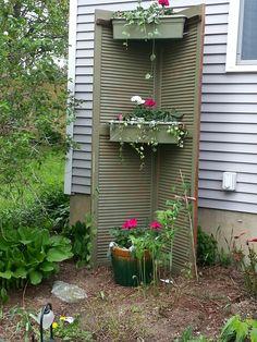 repurposed shutters planted