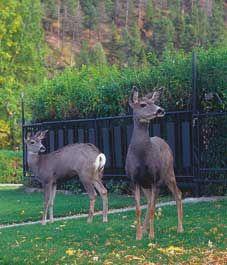 Deer-proof your garden - Canadian Gardening