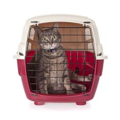 How To Introduce A Kitten To An Older Cat Crazy Cat Lady, Crazy Cats, Cat Carrier, Healthy Pets, Pet Travel, Pet Safe, Cat Facts, Cat Life, Cats And Kittens