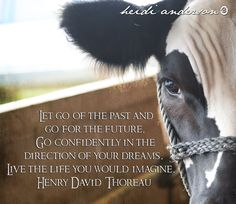 dairy cattle sayings - Avast Yahoo Image Search Results Cow Quotes, Animal Quotes, Farm Quotes, Show Cows, Pig Showing, Teacup Pigs, Dairy Cattle, Show Cattle, Showing Livestock