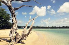 No Mans Land, Trinidad & Tobago #Caribbean #Travel #Beach #tree
