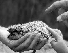 WHY DOES THIS KILL ME. All I want is a hedgehog. That's all :(