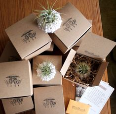 Party Favor pack of terrariums