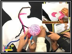 Students create a bulletin board of the human body systems in cooperative groups. Science Classroom, Science Fun, Classroom Ideas, Teacher Bulletin Boards, Teaching Career, Teaching Ideas, Human Body Systems, Middle School Science, Upper Elementary
