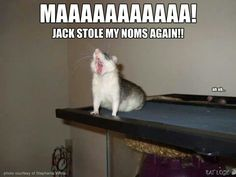 The battle cry when yogies are missing !