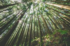 woods | Flickr - Photo Sharing!