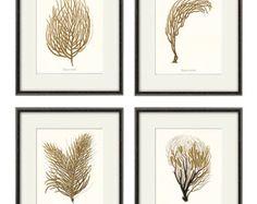 Coral del mar lámina sistema impresión arte náutico de 4 antiguos de pared victoriano arte océano playa impresión arte hogar decoración pared arte mar imprimir