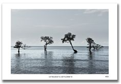 Les palétuviers de la mangrove de #Mayotte
