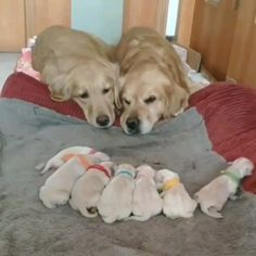 Dogs Family Cute baby dogs and puppies. So adorable.Cute baby dogs and puppies. So adorable. Cute Little Animals, Cute Funny Animals, Funny Dogs, Cute Cats, Cute Baby Dogs, Cute Puppies, Dogs And Puppies, Cute Babies, Doggies