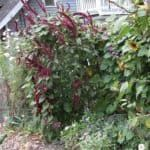 Erbe spontanee commestibili: riconoscerle e coltivarle Plants, Plant, Planets