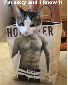 This Cat Knows the Secret to Getting Ripped - LOLcats is the best place to find and submit funny cat memes and other silly cat materials to share with the world. We find the funny cats that make you LOL so that you don't have to. I Love Cats, Crazy Cats, Cute Cats, Silly Cats, Funny Animal Pictures, Funny Animals, Cute Animals, Dog Pictures, Cat Memes