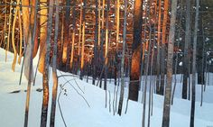 Winter Sunset, 36 x 60, 2013 by Peter Rotter