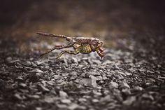 Runaway frogs
