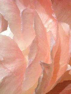 Inner Pink Light - Peonies  http://society6.com/IAMMOF/Inner-Pink-Light-Peonies_Print